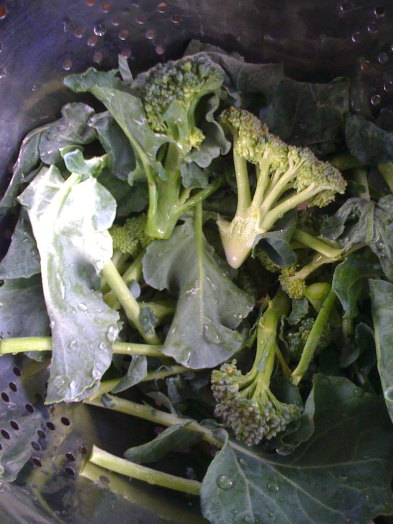 Fresh Broccoli Rabe
