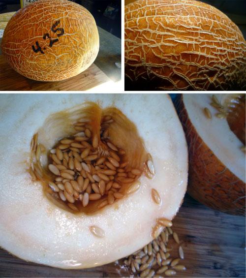 Israeli-Melon-Collage