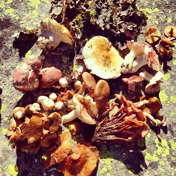 Wild Mushrooms Foraging 3