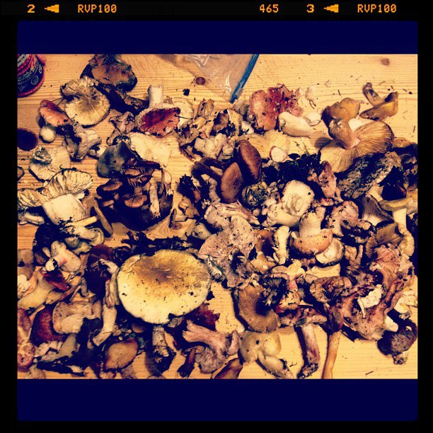 Wild Mushrooms Foraging
