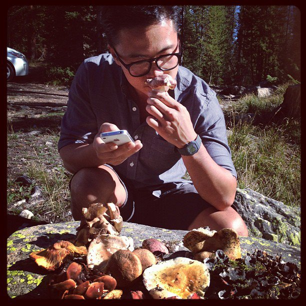 Viet Pham Wild Mushrooms