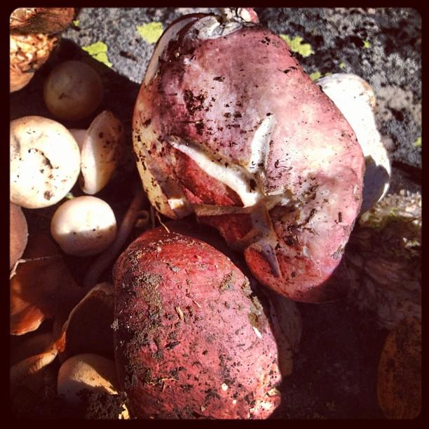 Wild Mushrooms Foraging 2