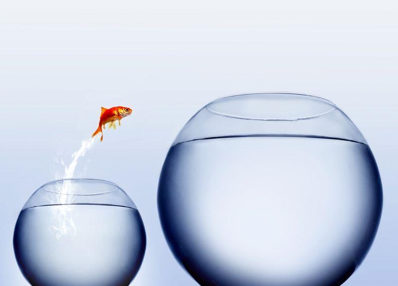 Fish change