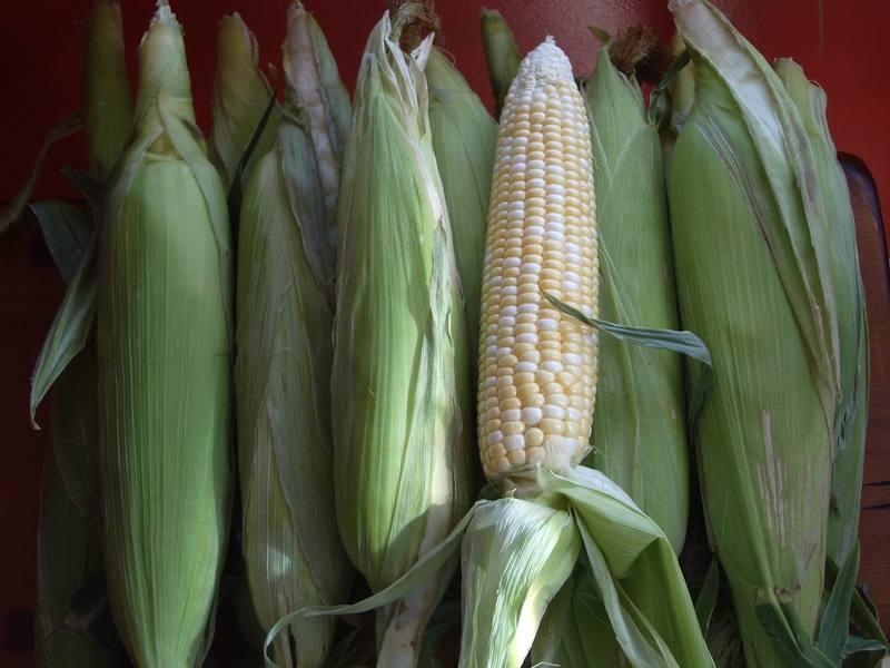 Utah_sweet_corn